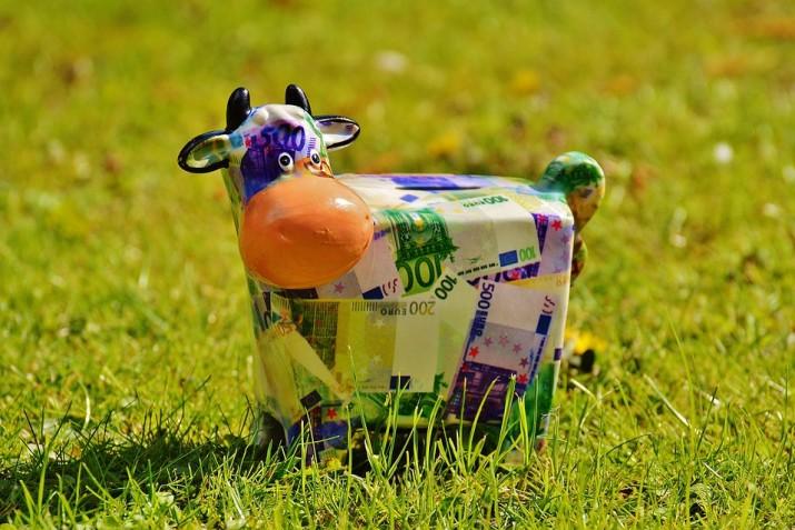 cow-1357202_960_720