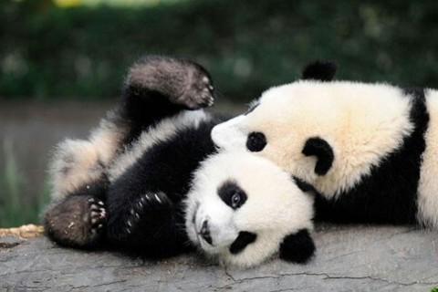 【ママレビューつき】夏休みに子連れで訪れたい、ベビールームのある動物園【全国】
