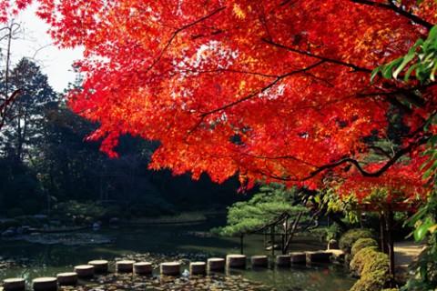 【京都】紅葉シーズンを満喫!子連れで秋京都デビューはいかが?