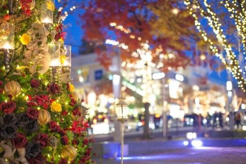 今年のクリスマスこそ自宅イルミネーションデビュー!始め方は?気になる電気代は?